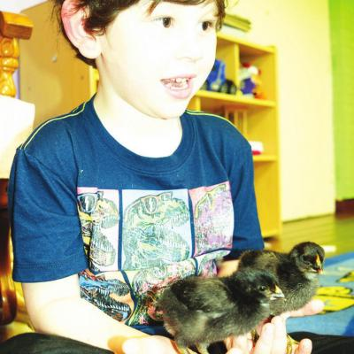Tiny Tornadoes Daycare kids enjoy hatched chicken experience