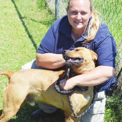 Estrada uses new job to find homes for animals
