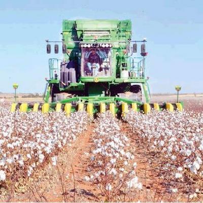 Cotton harvest in full swing