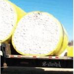 Early start gives cotton harvest edge
